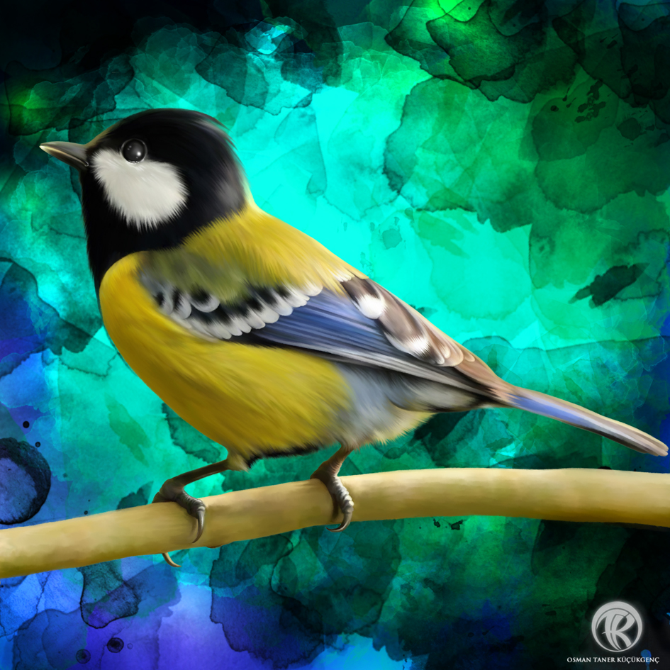 BIRDS OF HEAVEN Series 4 ( Alternate background ) Digital Painting wacom intuos5 - Photoshop CS